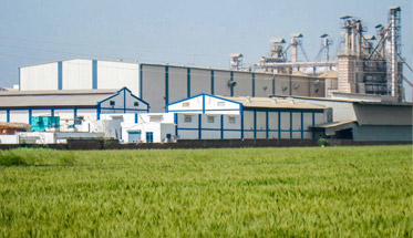 Phoenix Group from Dubai to set up $50 Million rice mill in Andhra Pradesh